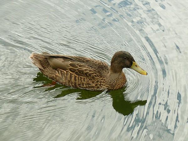 18 - Concours les oiseaux ..... oct 2011 P1140020