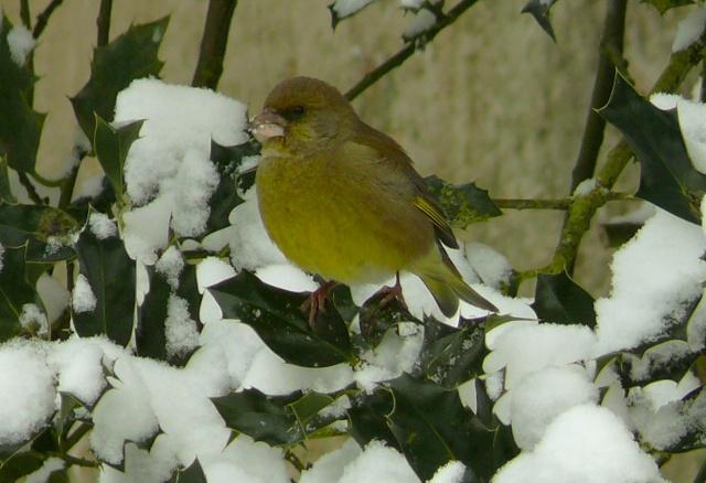 21 - Paysages d'hiver.........photos reçues !!! - Page 6 P1150710