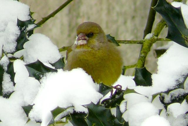 21 - Paysages d'hiver.........photos reçues !!! - Page 6 P1150711