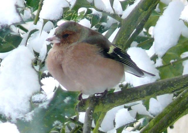21 - Paysages d'hiver.........photos reçues !!! - Page 6 P1150713