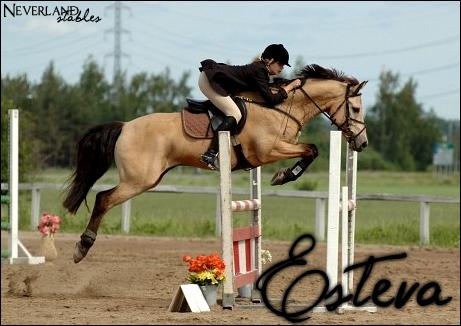 Chevaux de propriétaires [11 chevaux] Esteva10