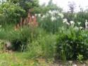 quelques photos de mon jardin Pict2111