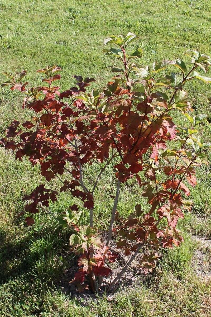 Petit arbuste aux couleurs variées Img_2210