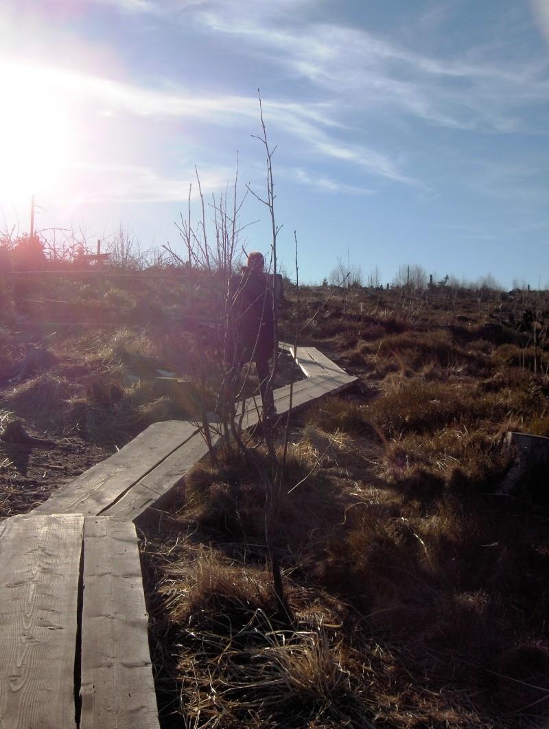 Forêt noire en allemagne Hpim4436