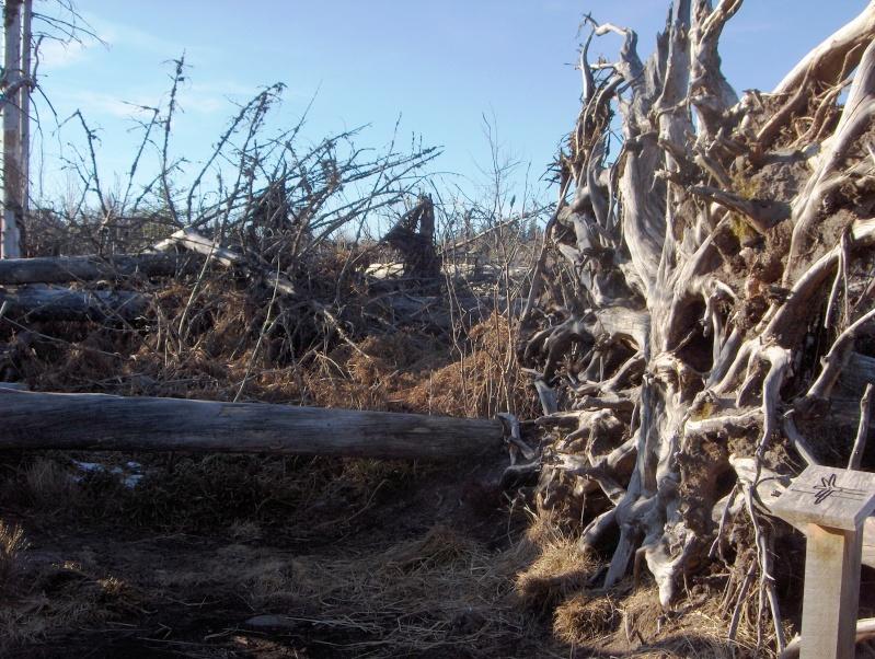 Forêt noire en allemagne Hpim4439