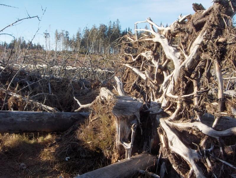 Forêt noire en allemagne Hpim4440