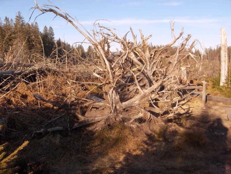 Forêt noire en allemagne Hpim4441