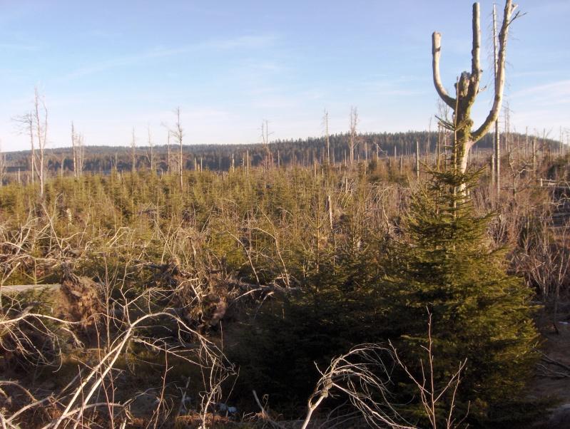 Forêt noire en allemagne Hpim4444