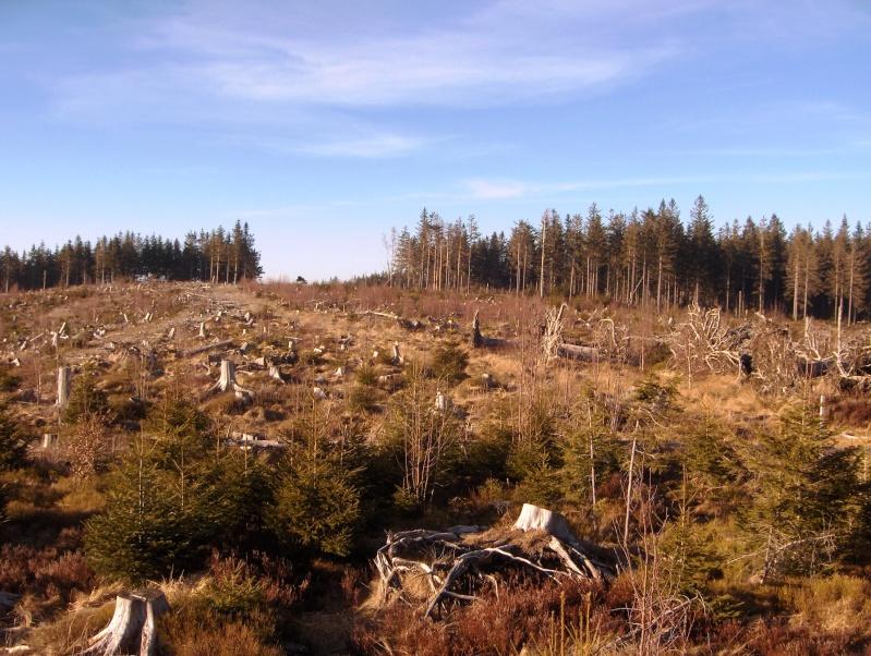 Forêt noire en allemagne Hpim4445