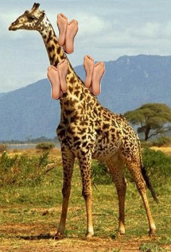 ou était Jésus ? Girafe10