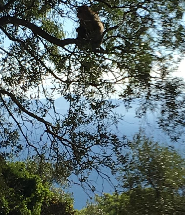 [ESPAGNE] En traversant l'Andalousie Img_1316