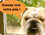 LES GRANDES LOIS POUR LA PROTECTION ANIMAL Tesaer10
