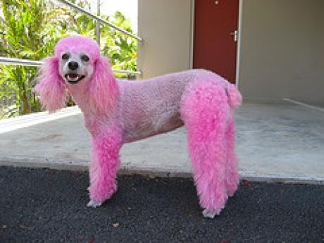 Pour avoir teint son chien de compagnie en rose 750 euros Image810
