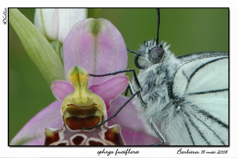 orchidees et papillons Fdsc_711