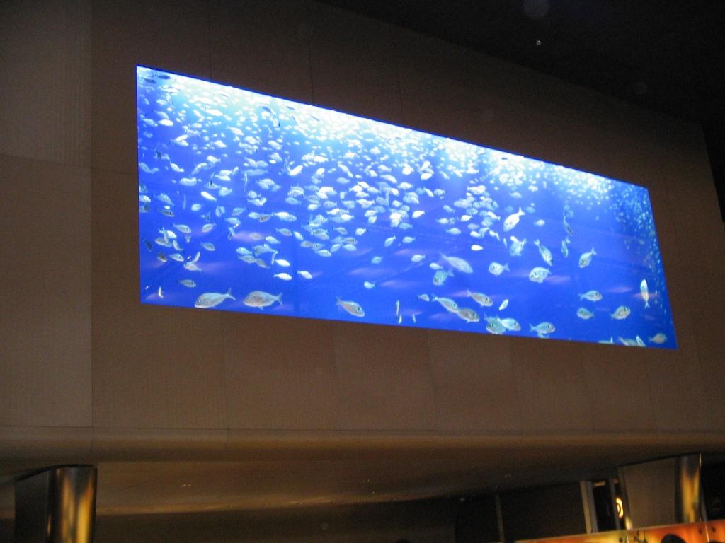 Les poissons de l'aquarium Breitling de Bâle.... Img_2036