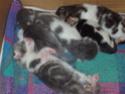 chatons!!! P5280010