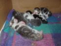 chatons!!! P5280011