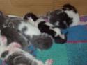chatons!!! P5280012