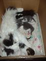 chatons!!! P6070010