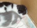 chatons!!! P6070011