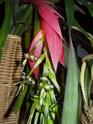 fleur de Billbergia nutans Pa060013