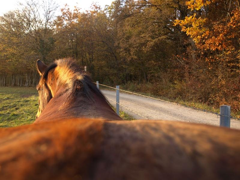 thème mai 2012: un bout de cheval !  - Page 3 Pb015213