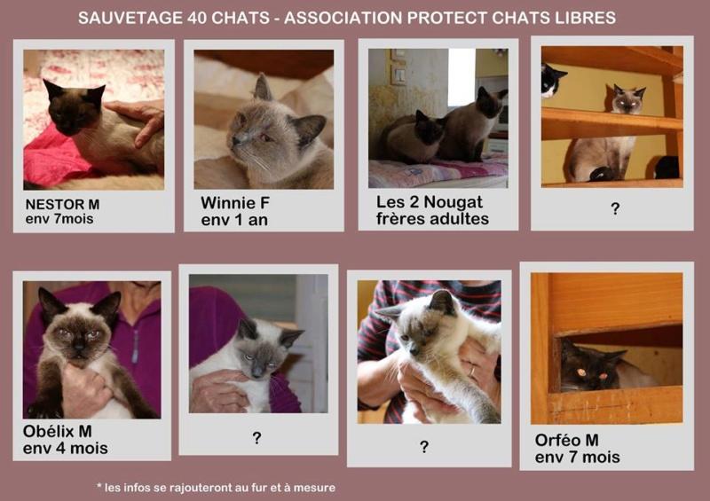 Enorme SOS pour une quarantaine de chats en Bretagne 46624410