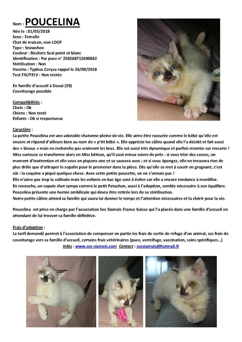 Les chats réservés Poucel11