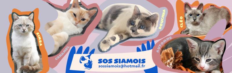 Sos Siamois Franco Suisse