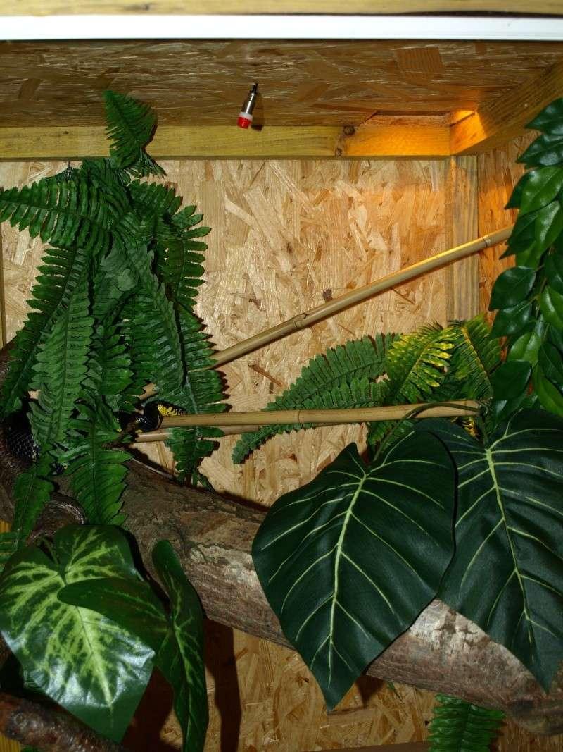 quelques terra tropicaux P1013315