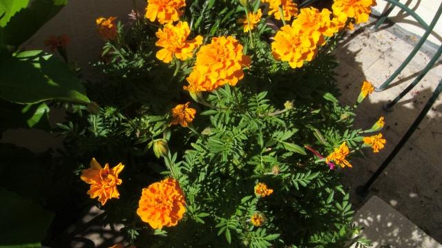 Floraisons du mois de septembre - Page 2 S73f3010