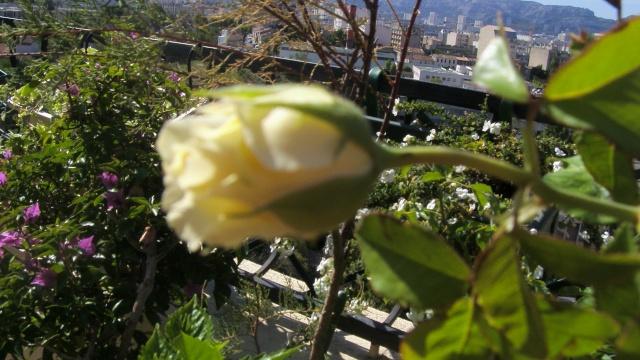 Floraisons du mois de septembre - Page 2 S73f3014