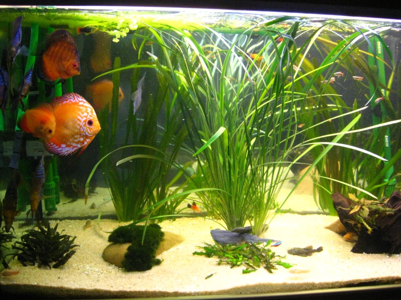 créer un forum : aquariophilie bouche du rhone - Portail Photo_20