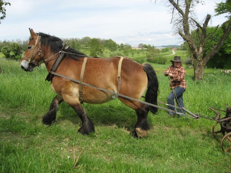 Thème de Janvier : le cheval au travail - Page 3 Fanny112