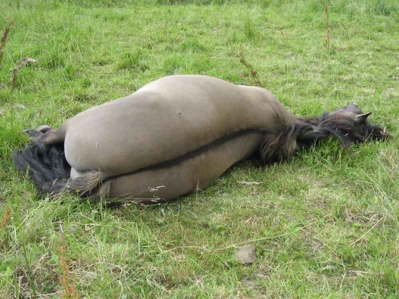 Thème de Mai 2013 : Le Cheval en pleine sieste!! Img_3710