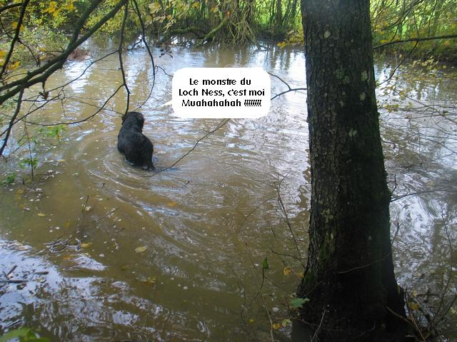 Chats, chiens... - Page 6 Img_1523