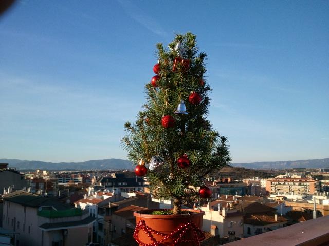 Bonsai de Navidad 2011-110