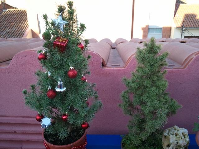 Bonsai de Navidad 2011-111