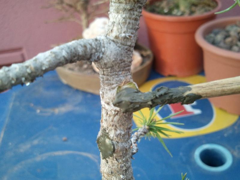 Como formar este Pino? - Página 2 2012-078