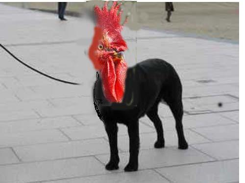 A votre avis... de quelle race est ce chien ? - Page 6 Biarri10