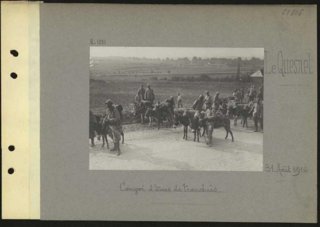 1916 PHOTOS provenant des albums VALOIS : CONVOI D'ânes Sans_t49