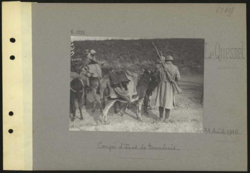 1916 PHOTOS provenant des albums VALOIS : CONVOI D'ânes Sans_t59