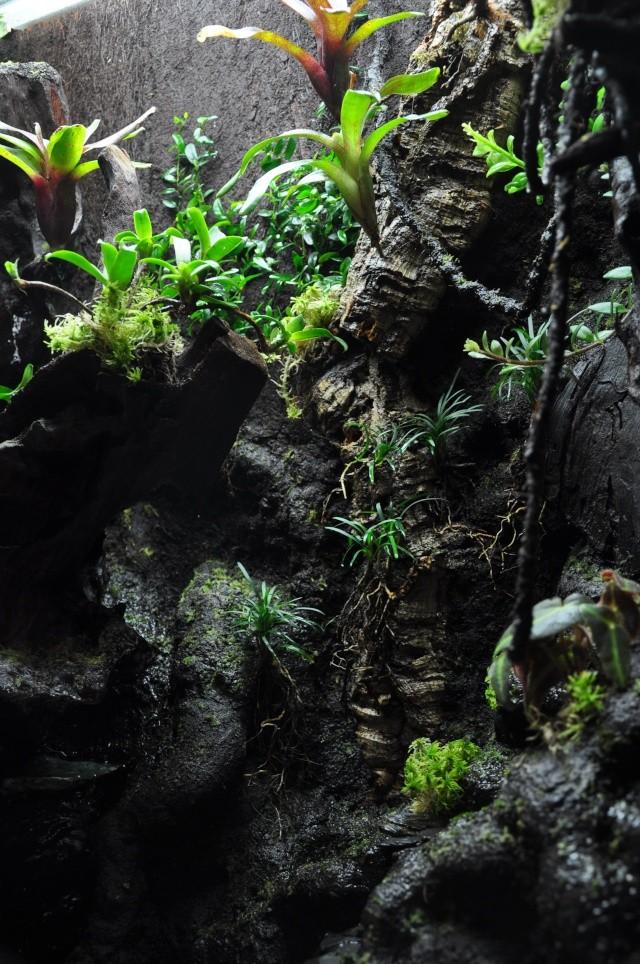 "Terrarium tropical humide by ""Le Pelu"" 1014"