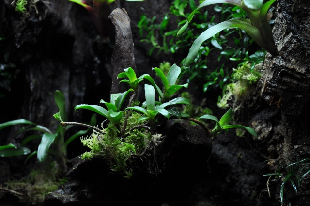 "Terrarium tropical humide by ""Le Pelu"" 1212"