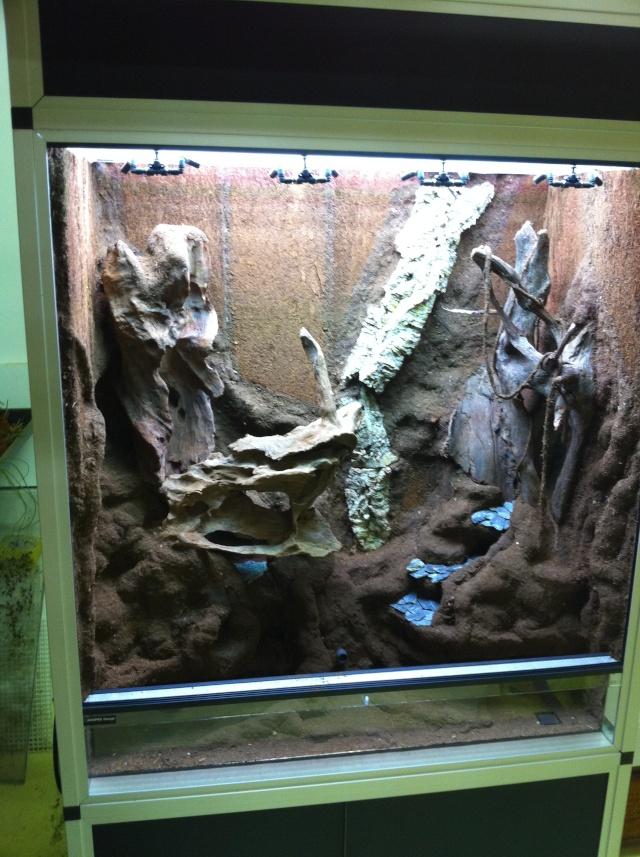 "Terrarium tropical humide by ""Le Pelu"" 613"