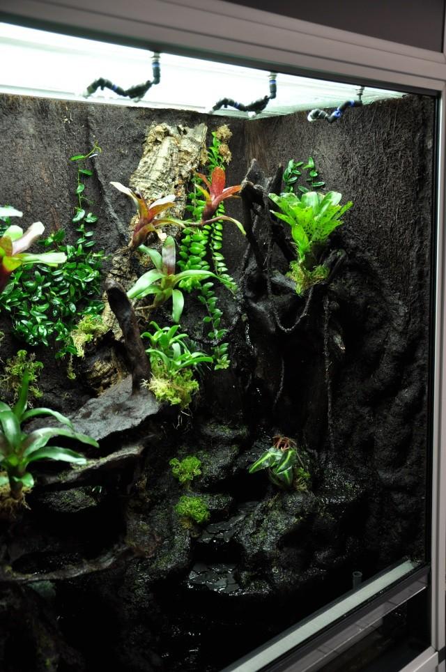 "Terrarium tropical humide by ""Le Pelu"" 913"