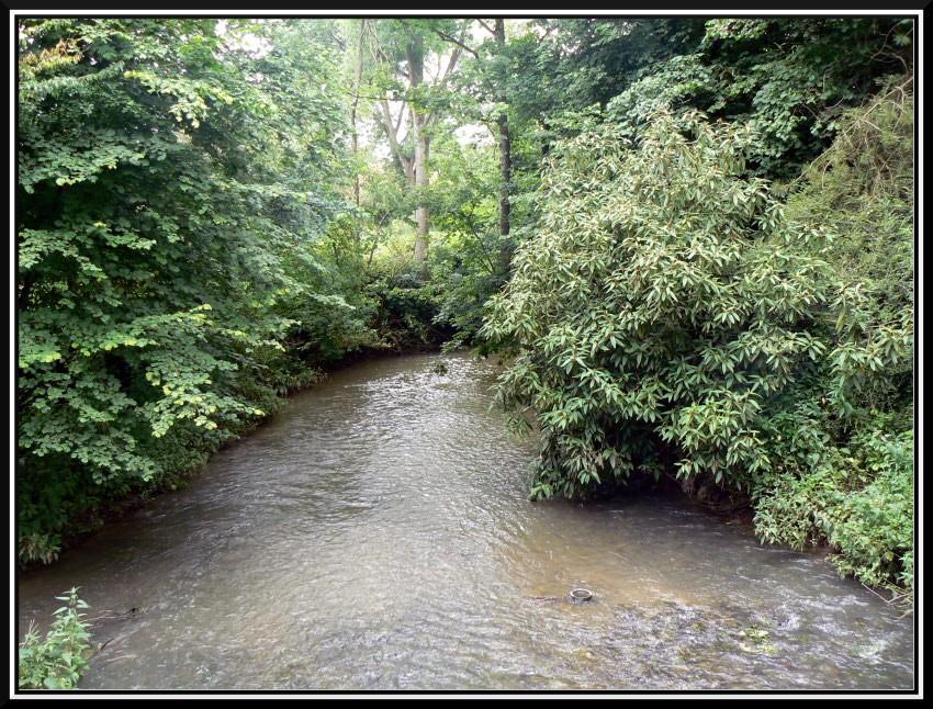 La petite rivière de notre village P1090910