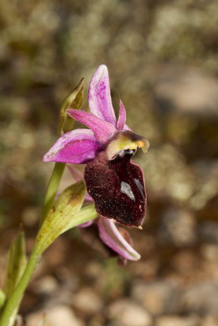 HERAKLEIA : un paradis pour orchidophiles - Page 2 Img_2611