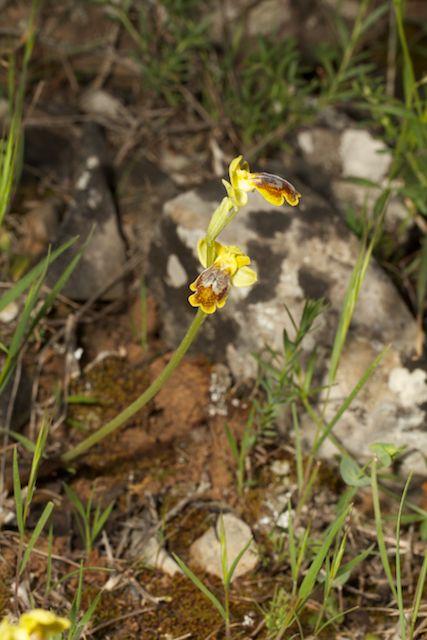 HERAKLEIA : un paradis pour orchidophiles - Page 2 Img_2710