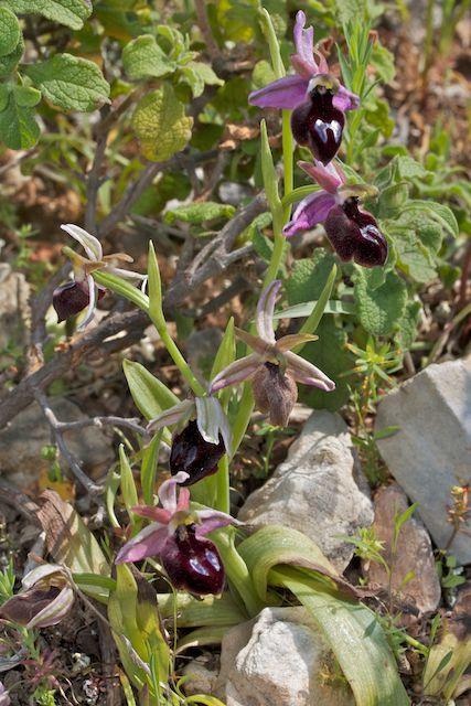 HERAKLEIA : un paradis pour orchidophiles - Page 2 Img_2721